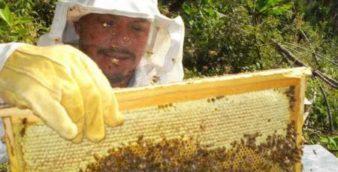 curso apiario