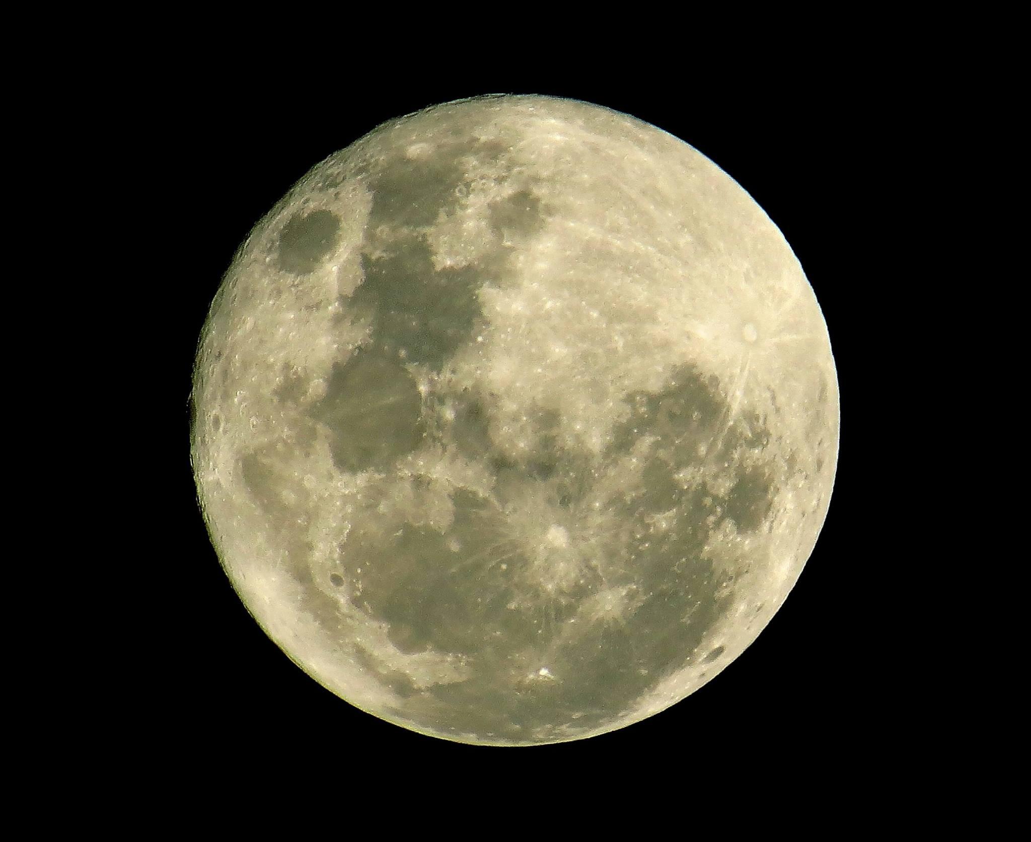 luna16